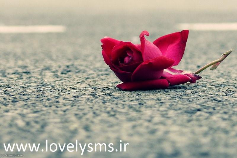 love 14 اس ام اس عاشقانه سری هشتم